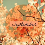 Latest News and September FREE Book!